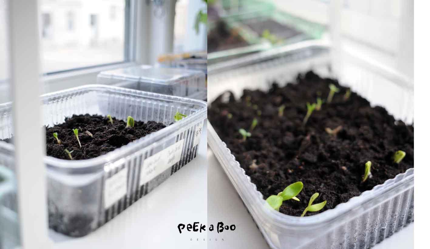 New plants by peekaboo design