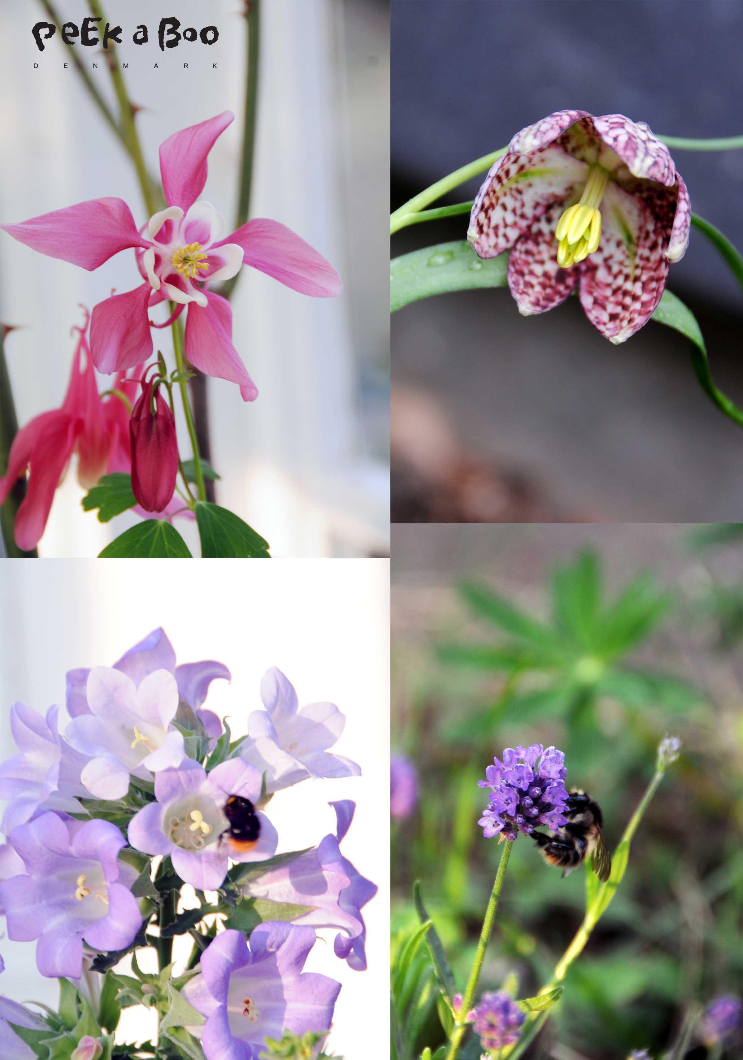 Blomster fra haven.