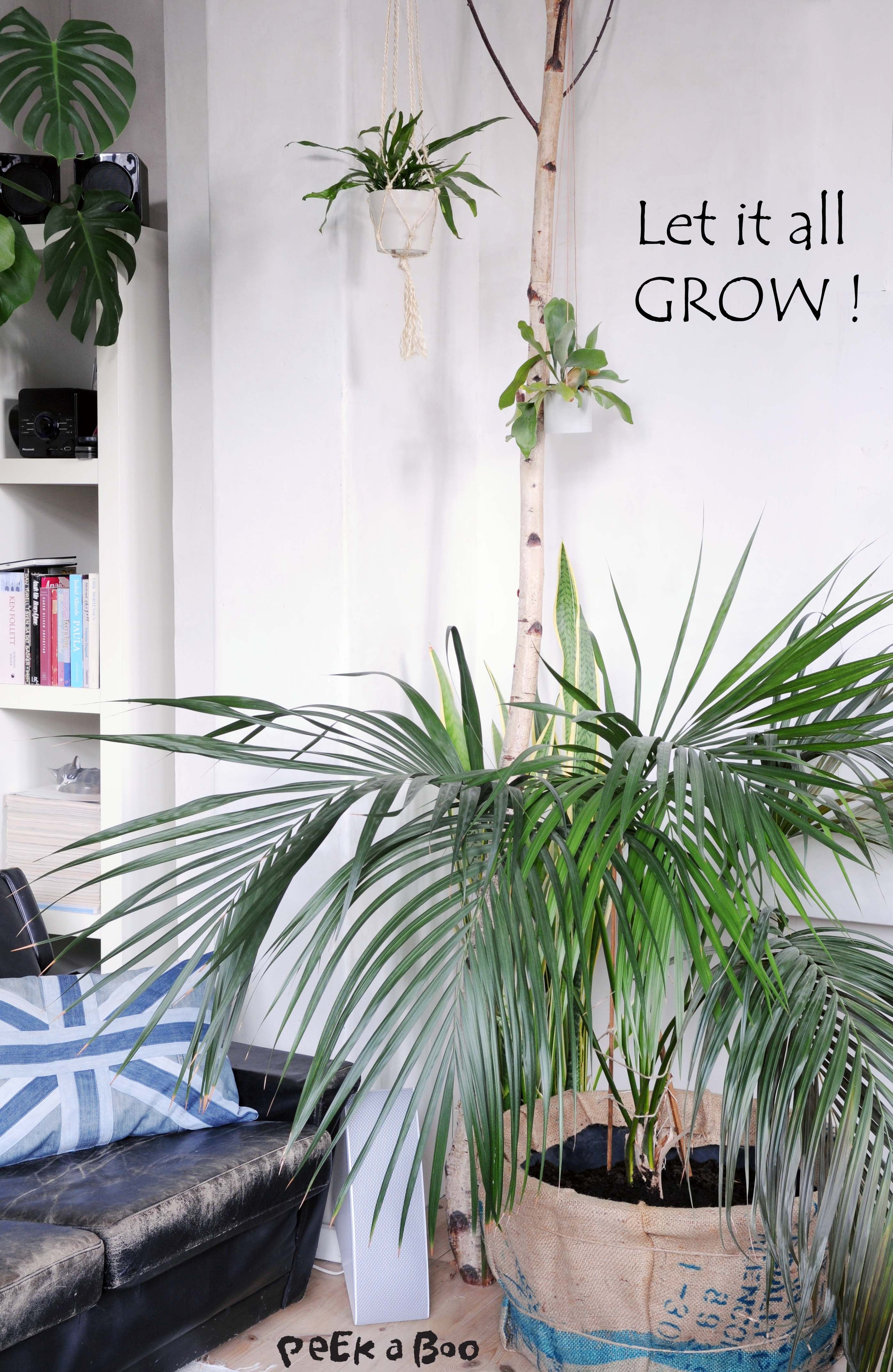 Green Living in your livingroom, makes the air in your room cleaner, and living with plants makes you happier. It's been proven, so go make your place a better and greener home.