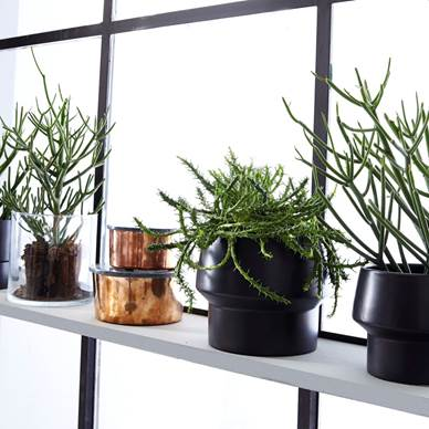 IdéMøbler also wants the green plants to move into the homes, so here you see new pots from them.