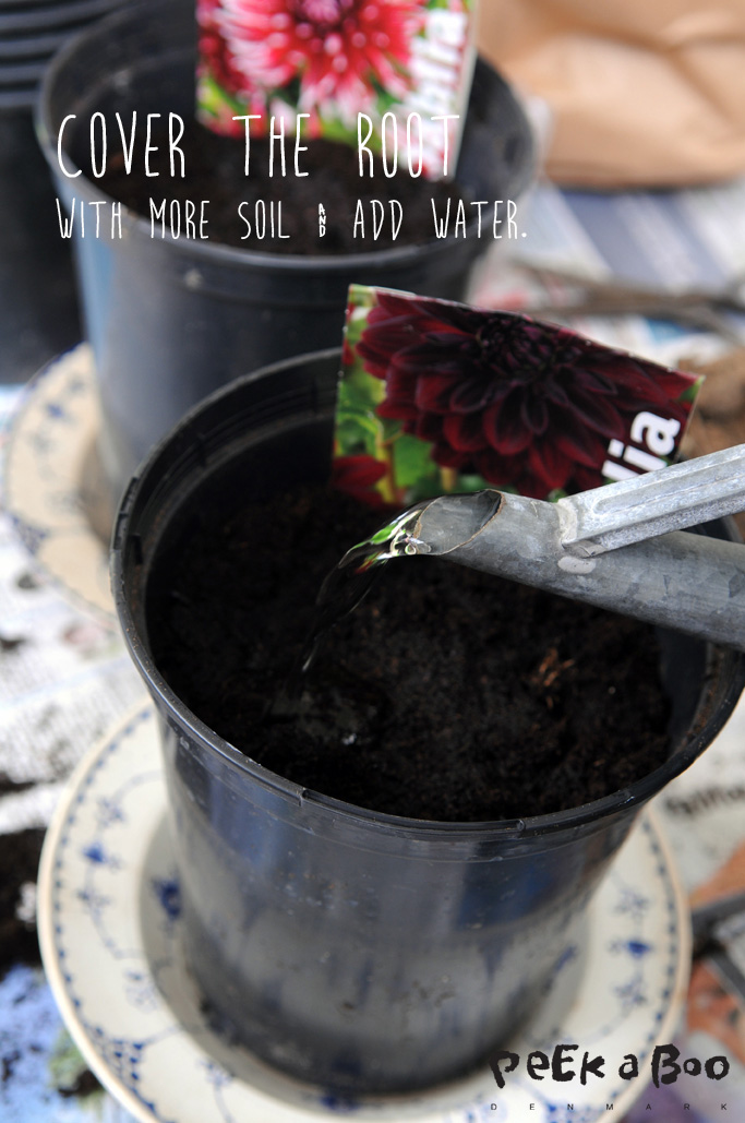 Cover up with more soil and add some water to it.