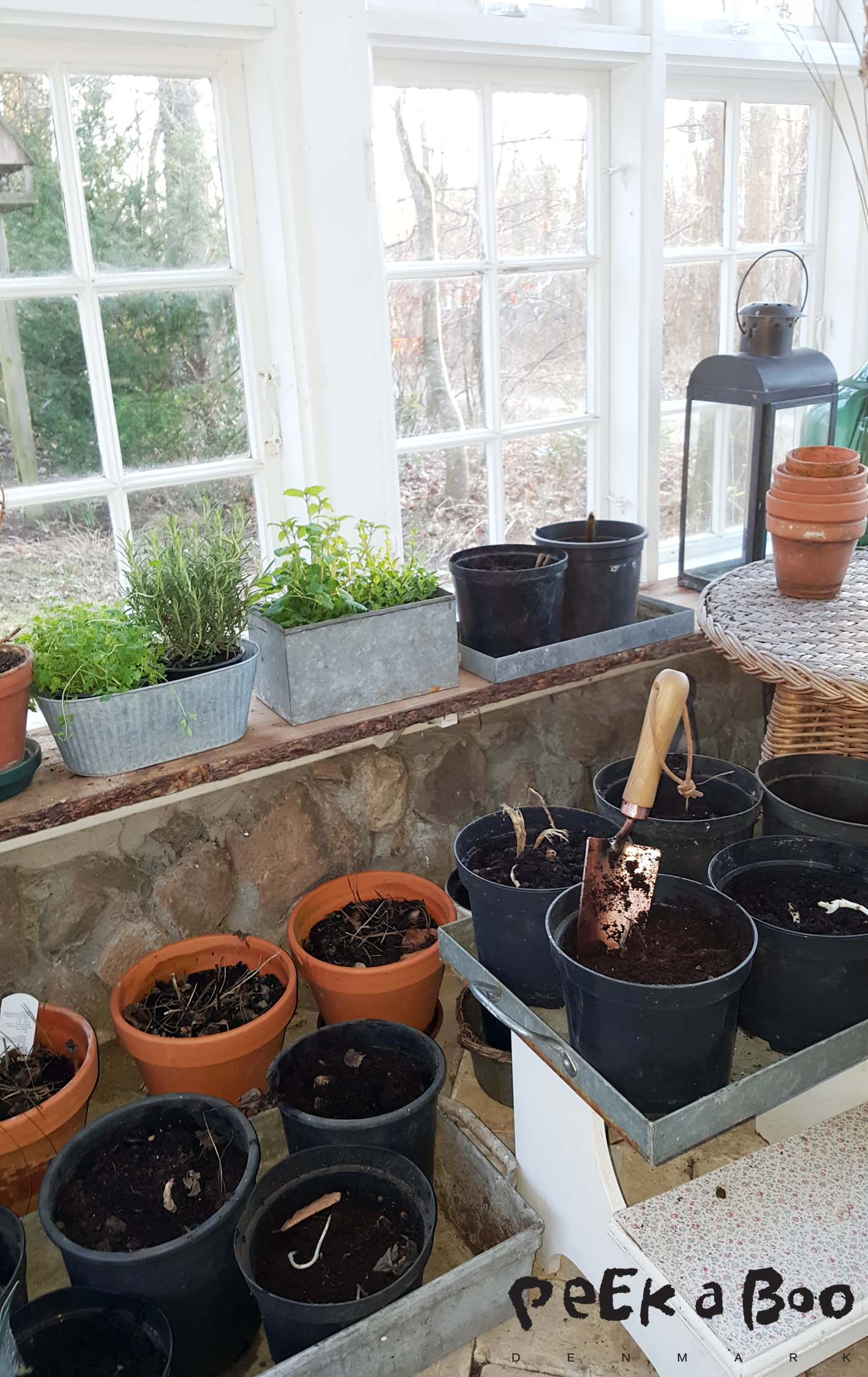 The greenhouse is now filled with pots. And my patience now has to come to a test...