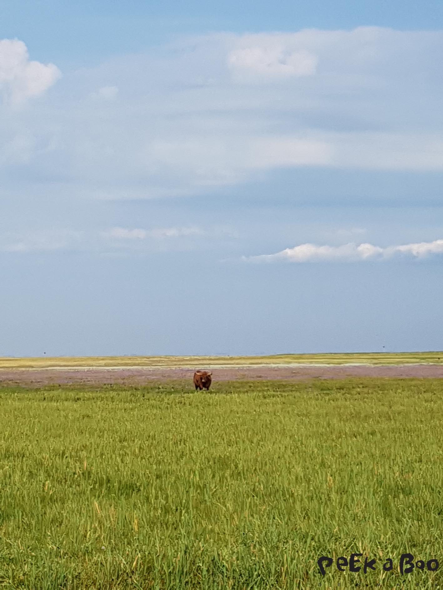 The area was earlier covered with water but now it is meadow where the cows grass.
